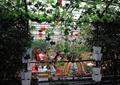 花架,餐桌椅,藤蔓植物,生态农庄