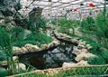水流景观,景石,金鱼,生态农庄