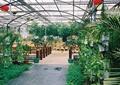 地面铺装,栏杆,盆栽植物,天花吊顶,生态餐厅