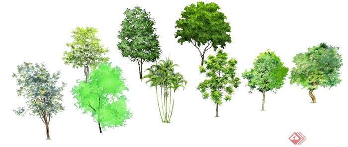 16棵景观植物乔木su模型