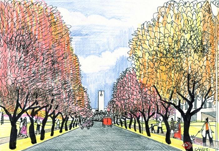 景观设计手绘图-道路景观行道树-设计师图库