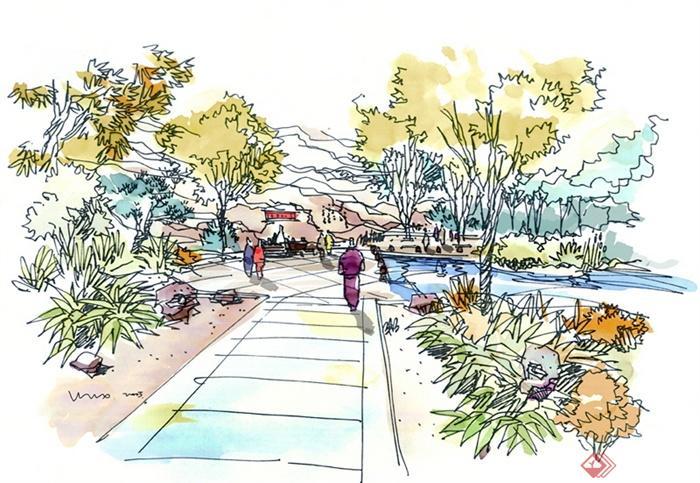 景观设计手绘图-道路景观乔木行道树-设计师图库