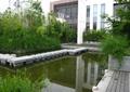 汀步橋,汀步,景觀水池