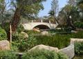 水生植物,景石,矮墻,種植池,園橋,水池景觀