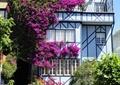 垂直绿化,藤蔓植物,住宅建筑,台阶,道路,地面铺装