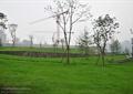 草坪景观,景观树,矮墙,挡土墙