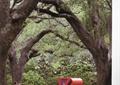 常绿大乔木,景观小品,雕塑,花园