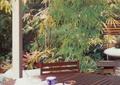 木桌椅,茶幾,竹子,庭院景觀,住宅景觀
