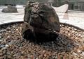 石头,石头标志,景观石头,景石
