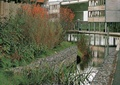 河流景观,水生植物,驳岸