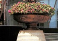 花钵,花卉,花坛,花盆,花园景观,花卉植物