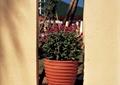 花盆,花盆插花,花钵,花卉植物,花园景观