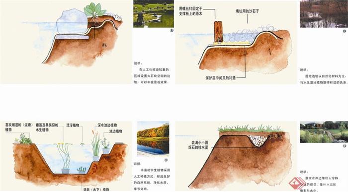 水体景观,驳岸,驳坎,水生植物