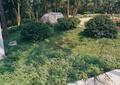 花卉植物,灌木球,景石,景观树