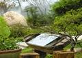 分区小船小品,落叶小乔木,水钵,水生植物,木桩