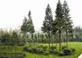 草坪景观,灌木植物,常绿乔木