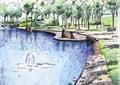 水池景观,驳岸,草坪,景观树