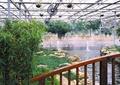 木栏杆,景石,河流景观,温室大棚,喷泉水景,竹子