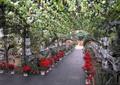 大棚,花架,盆栽