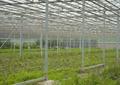 温室大棚,铁艺廊架,景石,花圃