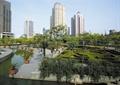 树池,树池植物,水池水景,灌木墙
