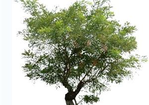 多张树木贴图设计tif格式