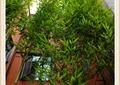 竹子素材,墙面造型,窗子,玻璃橱窗