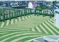 公共绿地,绿地景观,草坪景观