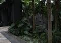 园路,卵石水沟,景观树