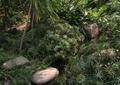 自然石,溪流,溪流水景,景石石头
