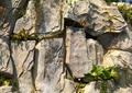 景石,假山,自然石,石头
