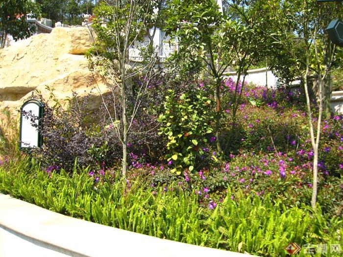 路标,假山,景石石头,石头,自然石金星蕨