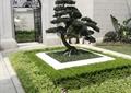 种植池,景观树,围墙,铁艺大门,地面铺装,庭院景观