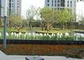 种植池,花卉植物,喷泉水池景观,景观树,水生植物,路灯,住宅景观