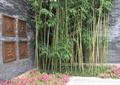 景墙,围墙,景墙雕塑,树池,花池