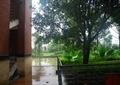 圍欄欄桿,木地板,圍墻,樹池