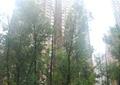 大乔木,灌木丛,草坪,园路,住宅景观