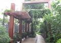 花架,盆栽植物,园路,地面铺装,景观树,藤蔓植物,住宅景观