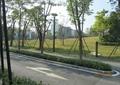 道路景观,道路绿化,道路街道,灌木丛,乔木