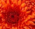 花朵,花卉植物,花卉