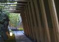 木廊架,园路,地灯,酒店景观