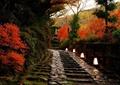 园路,台阶,地灯,彩色乔木