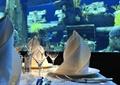 餐厅,餐具,餐布,酒杯