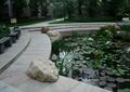 驳岸景观,滨水步道,驳岸台阶,荷花池,景石