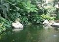 人工水池,驳岸景观,假山石头