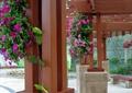 木花架,吊蘭,花架柱