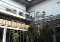 宿舍楼,竹林