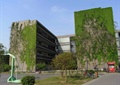 垂直绿化,植物绿化墙