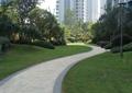 小区人行道,曲线道路,绿化带,绿篱