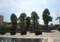 住宅去廣場景觀,桌椅,噴泉水池,樹池